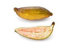 Finger Lime (Citrus australasica) Stock Photos