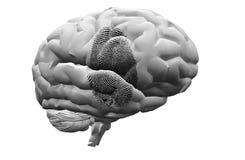 Finger Print on brain. High Resolution Illustration Finger Print on brain Stock Photo