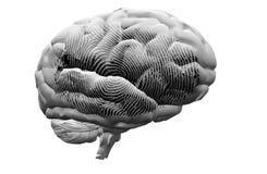 Finger Print on brain Stock Photography