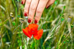 Finger with red fingernail touching Royalty Free Stock Images