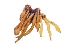 Finger Root Royalty Free Stock Photos