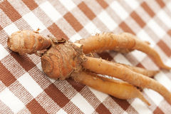Finger root herb Royalty Free Stock Photography