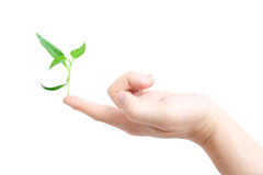 Finger supporting a new plant Stock Photos