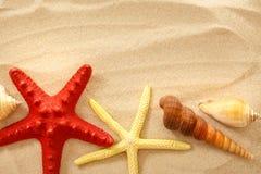 Fingerfish, seastar e conchas do mar na areia foto de stock royalty free