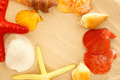 Fingerfish, seastar e conchas do mar na areia fotografia de stock
