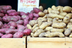 Fingerling Potatoes Royalty Free Stock Images
