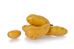 Fingerling Potatoes royalty free stock image