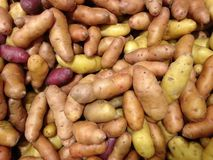 Fingerling Potatoes for Sale. stock photo