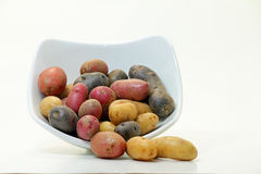 Fingerling Potatoes (Solanum tuberosum). Fingerling potatoes in white bowl; white background Royalty Free Stock Images