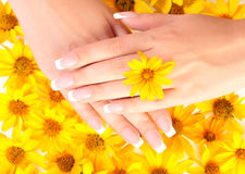Fingernails and flowers. French manicure on the hands of woman over background from yellow flowers, with flower between fingers stock photos