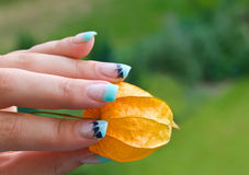 Fingernails of a woman with physalis Royalty Free Stock Images