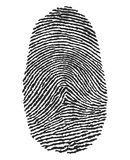 Fingerprint. Vector illustration of a fingerprint Stock Photography