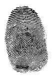 Fingerprint. Black fingerprint on the white background Stock Image