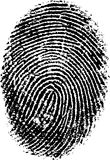 FingerPrint. Black and White Vector Fingerprint - Very accurately scanned and traced ( Vector is transparent so it can be overlaid on other images, vectors etc Stock Photos