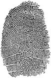 Fingerprint. Detailed Illustration of a Finger Print Royalty Free Stock Photos