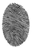 Fingerprint. Human fingerprint in back and white Stock Image