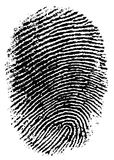 FingerPrint 6. Black and White Vector Fingerprint - Very accurately scanned and traced ( Vector is transparent so it can be overlaid on other images, vectors etc Royalty Free Stock Photo