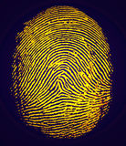 Fingerprint. Detailed image of an index fingerprint Stock Images