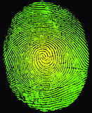 Fingerprint. Detailed image of a thumb fingerprint Royalty Free Stock Images