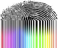 Fingerprint and barcode. Symbol for digital data, fingerprint and barcode Royalty Free Stock Image