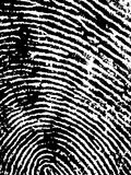FingerPrint Crop 1. Black and White Vector Fingerprint Crop - Very accurately scanned and traced ( Vector is transparent so it can be overlaid on other images Stock Images