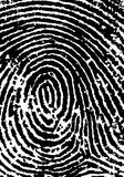 FingerPrint Crop 2. Black and White Vector Fingerprint Crop - Very accurately scanned and traced ( Vector is transparent so it can be overlaid on other images Stock Photos