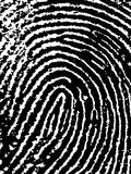 FingerPrint Crop. Close crop of a Fingerprint - Very accurately scanned and traced ( Vector is transparent so it can be overlaid on other images, vectors etc Royalty Free Stock Photos
