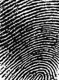 FingerPrint Crop 6. Black and White Vector Fingerprint Crop - Very accurately scanned and traced ( Vector is transparent so it can be overlaid on other images Stock Image