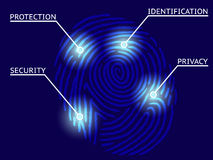 Fingerprint Identification with Whorls Royalty Free Stock Photo