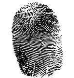 Fingerprint. Isolated on white Stock Photo