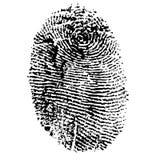 Fingerprint. Isolated on white Stock Image