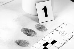 Fingerprint. View of a fingerprint revealed by printing Royalty Free Stock Image