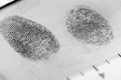 Fingerprint. View of a fingerprint revealed by printing Stock Images