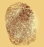 Fingerprints,  illustration. On vintage background Stock Image