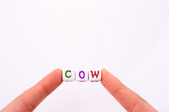 Fingers hold the word cow. Fingers hold colorful cubic letters of alphabet form the word ''cow Stock Photos