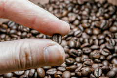 Fingers keep roasted coffee bean. macro close up Stock Images