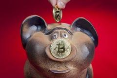 Human fingers lowers bitcoin coin into piggy bank slot. Stock Photos