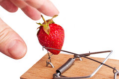 Fingers picking strawberry from mousetrap Stock Image