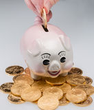 Hand placing gold coin into piggy bank. Fingers placing a single gold coin into the slot on a piggy bank with stack of coins around pig stock images