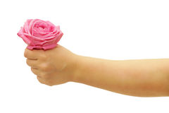 Fingers with rose. Manicured fingers holding rose isolated on white Royalty Free Stock Images