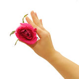 Fingers with rose. Manicured fingers holding rose isolated on white Stock Images