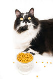 Finicky Cat Royalty Free Stock Photos