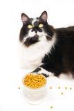Finicky Cat Royalty Free Stock Photos