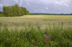 Finish farmland Royalty Free Stock Images