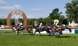 Finish of the horse race Stock Images