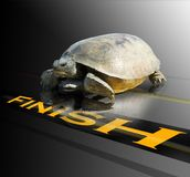 Finish line. A tortoise or turtle with perseverance and skill crosses the finish line. Concept for completion of a task or reaching goals stock photography