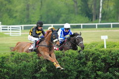 Finish of steeplechase in Lysa nad Labem Royalty Free Stock Photography