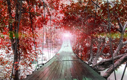 Finishes or Goals Line Concept. Lights at The End of Perspective Hanging Wooden Bridge with Various Type of Fantasy Red Trees Stock Photos
