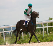 Finition de course de cheval Images stock