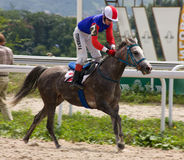 Finition de course de cheval Photos stock